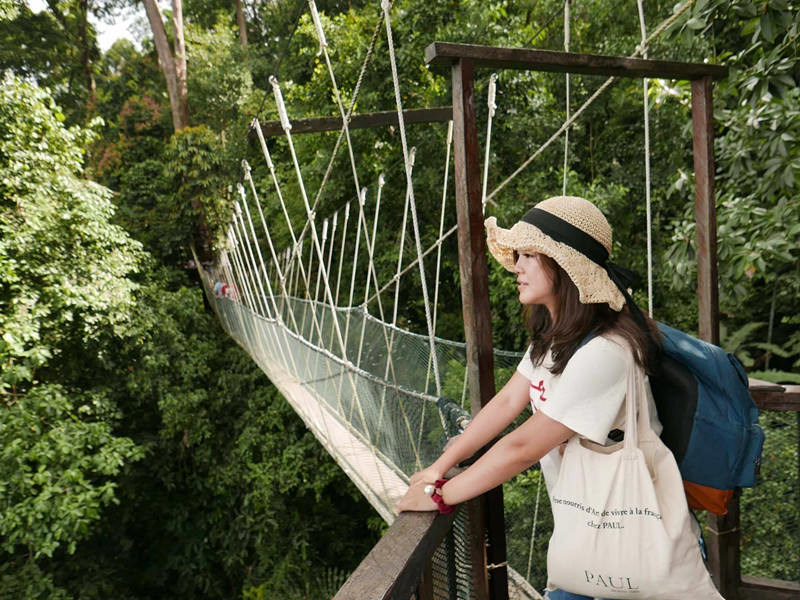 馬來西亞沙巴旅遊推薦|神山市集部落、高山奶牛場、神山國家公園溫泉區、神山原始溪流餵鯉魚。