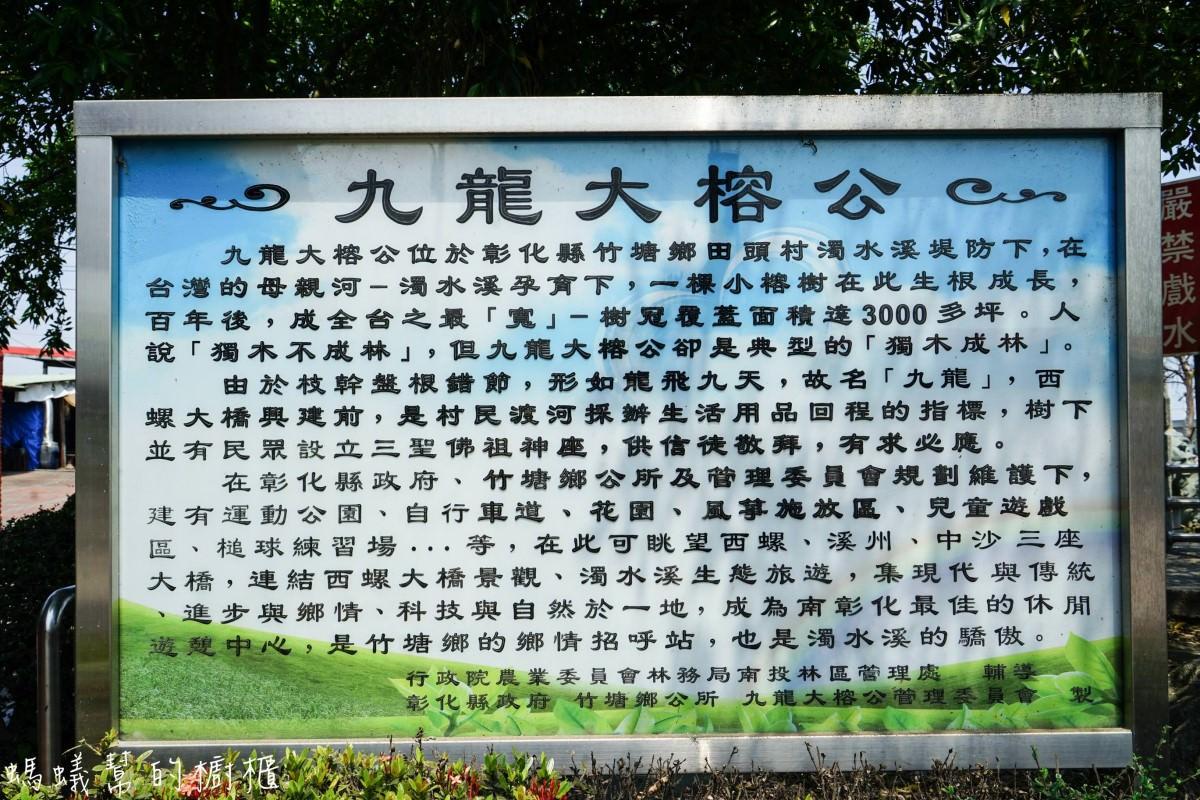 竹塘九龍大榕公