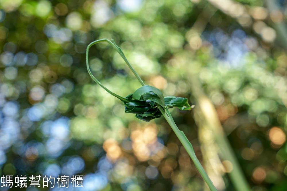 長青森林步道生態導覽