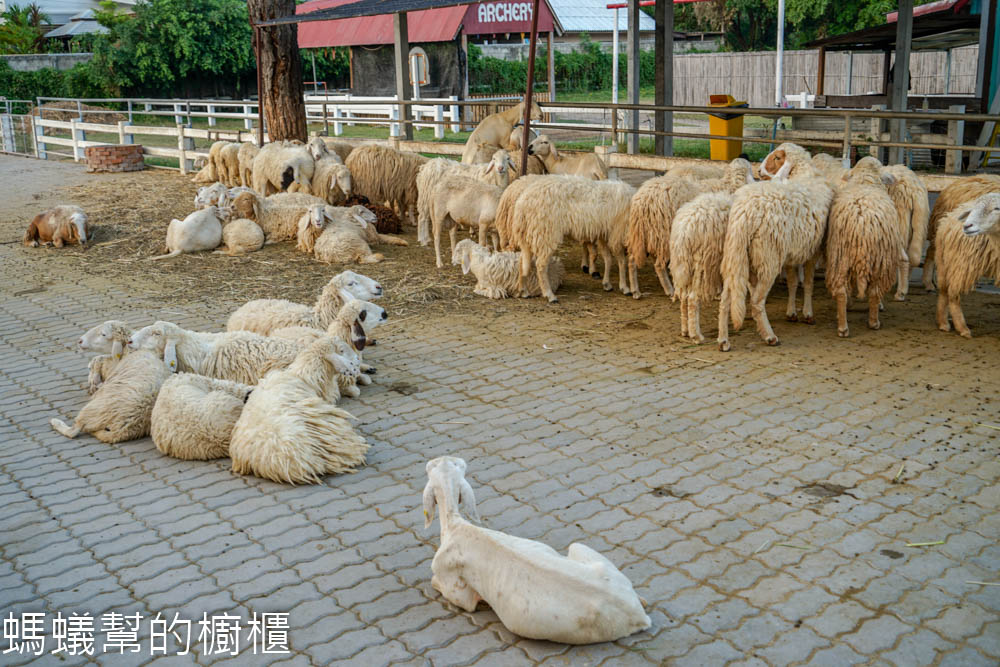 華欣綿羊農場SWISS SHEEP FARM
