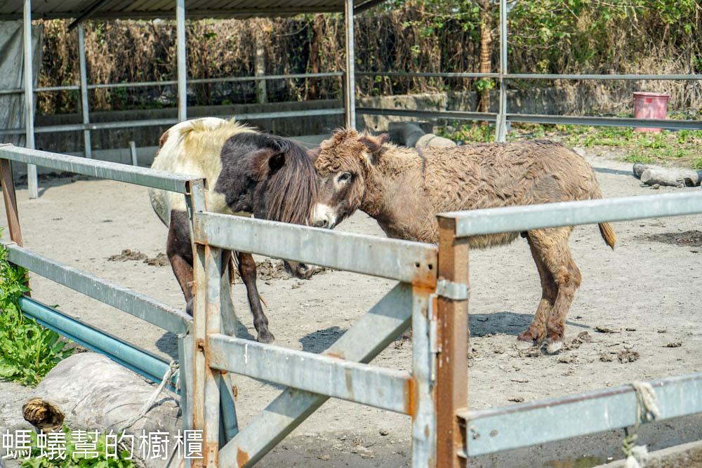 田中窯創藝園區蜀葵花